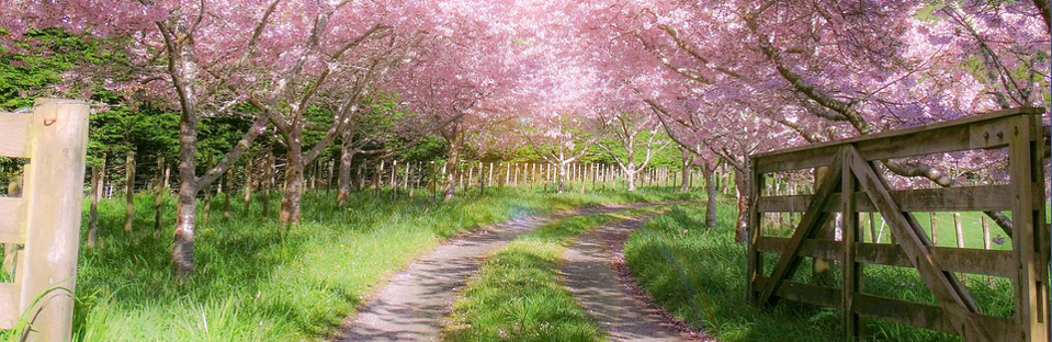 Farm Gate Pink Blossoms